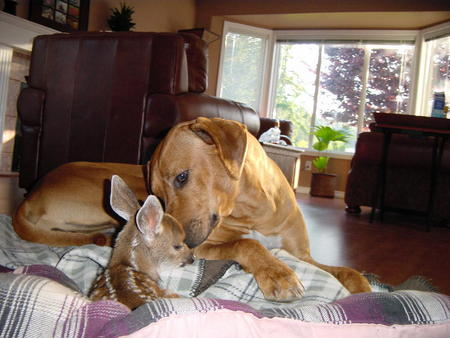 dog and fawn 2.jpg