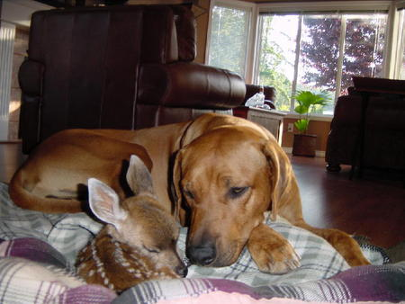 dog and fawn 3.jpg