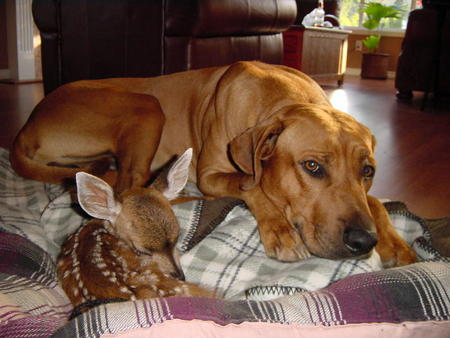 dog and fawn.jpg