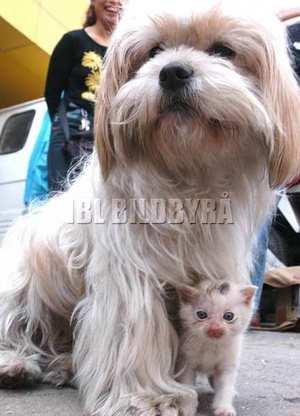dog-and-kitten.jpg