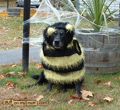 dog-bee.jpg