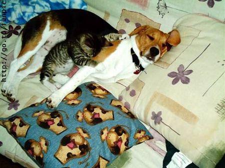 dog-cat-cuddle.jpg