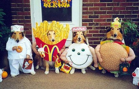 dog-fast-food-collies.jpg