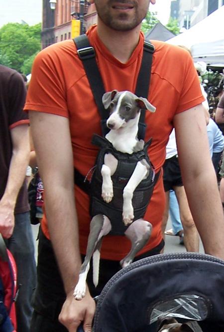 dog-snuggly.jpg