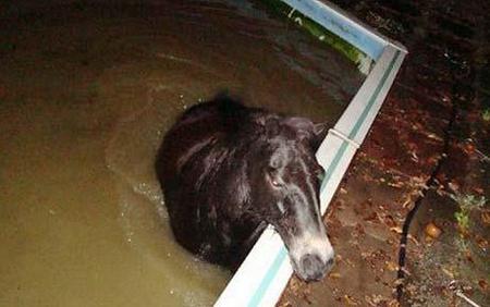 drunk-pony-460_1009771c.jpg