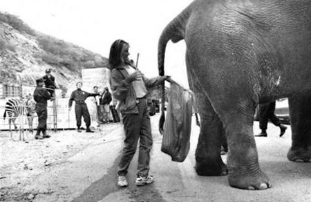 elephant234234.jpg