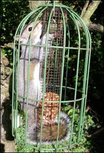 fat-squirrel-cage.jpg