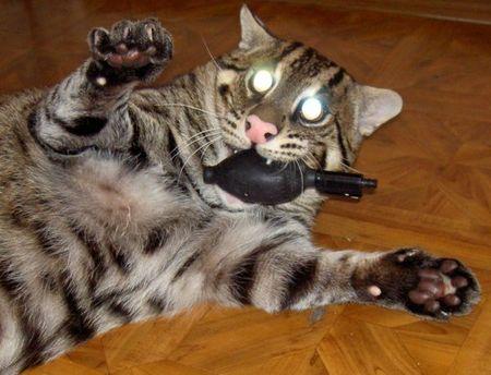 fishing-cat-20.jpg