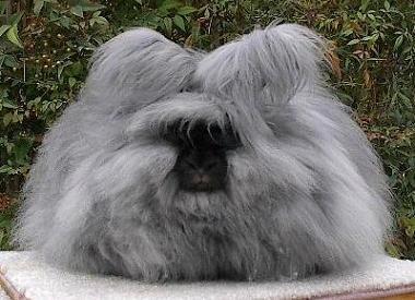 fluffy-bunny.jpg