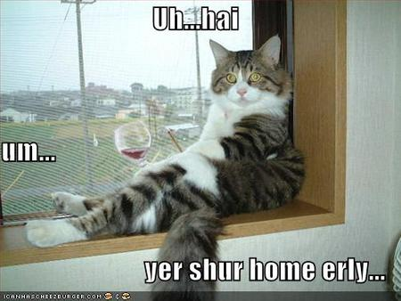 funny-pictures-cat-drinking-wine.jpg