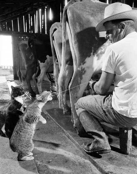 funny_animal_pics_6.jpg