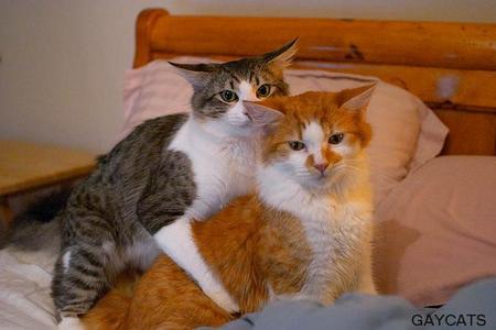 gay-cats.jpg