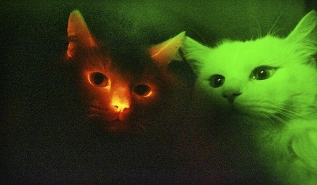 glow-kitties.jpg