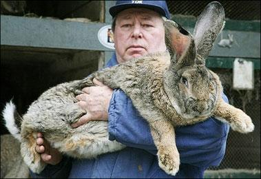 herman-giant-rabbit-03.jpg
