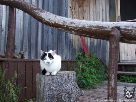 hitler-cat.jpg