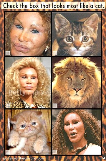 Jocelyn Wildenstein cat quiz