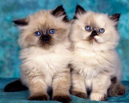 kitten-friends.jpg