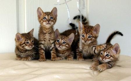 kittens-warming.jpg