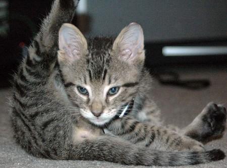 kitty-lick-butt.jpg