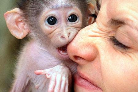 monkey-bite.jpg