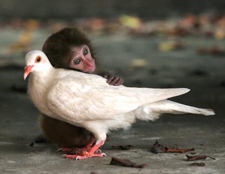 monkey-pigeon.jpg