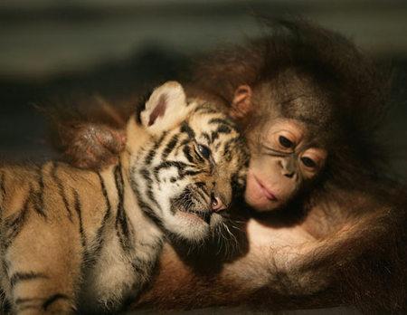 monkey-tiger.jpg