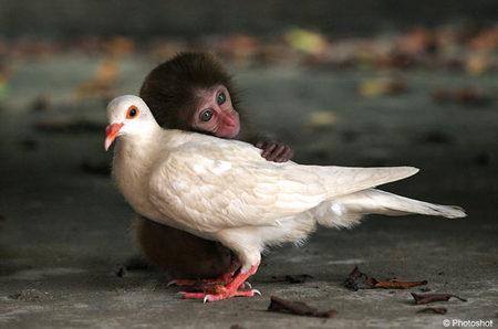 monkeypigPHTSHT1309_700x463.jpg
