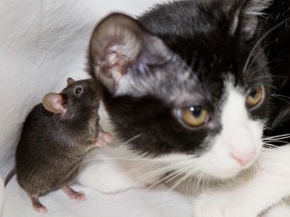 mouse-cat.jpg