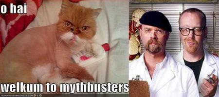 mythbustercat.jpg