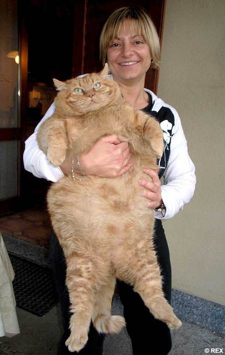 orazio-fat-cat.jpg