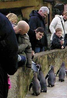 pete-doherty-penguin-01.jpg