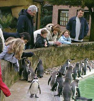 pete-doherty-penguin-02.jpg