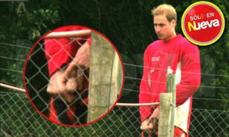 prince-william-penis-01.jpg