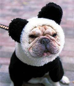 pug-panda.jpg