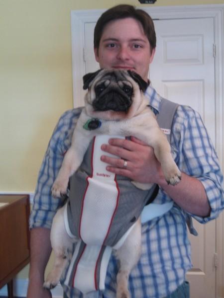 pug-snuggly.JPG