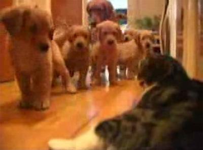 puppies-vs-cat.jpg