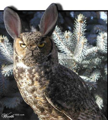 rabbit-owl-01.jpg