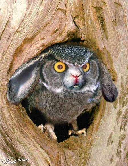 rabbit-owl-02.jpg