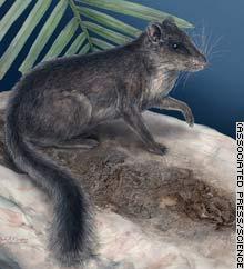 Laotian rock rat squirrel