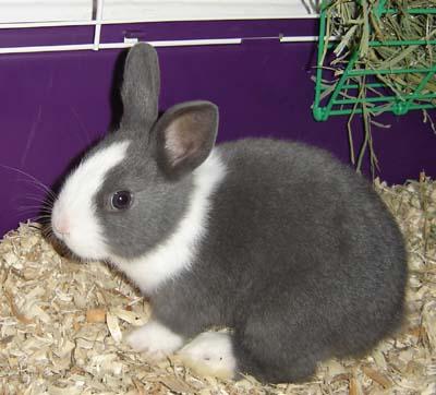 shimi-bunny.jpg