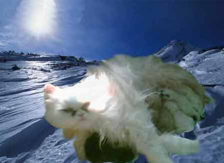 shimmering-kittens.jpg