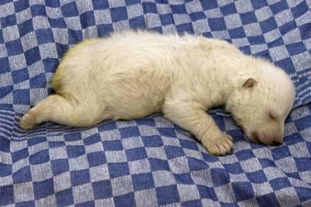 vera-polar-bear-01.jpg