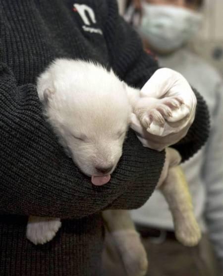 vera-polar-bear-02.jpg