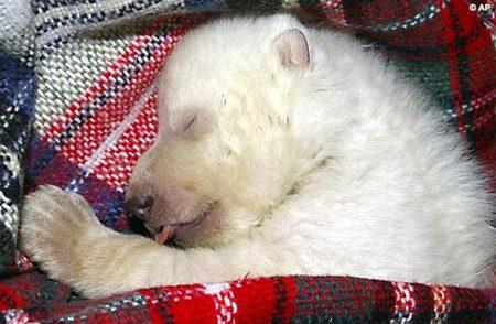 vera-polar-bear-04.jpg