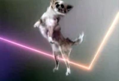 vitalic-dog.jpg