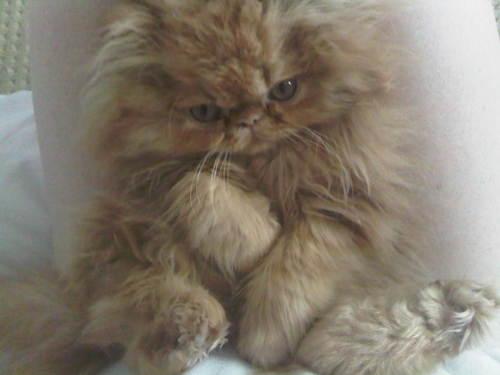 moe-kitten-01.jpg