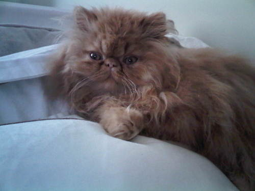 moe-kitten-02.jpg