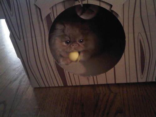 moe-kitten-03.jpg