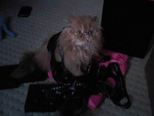 moe-kitten-04.jpg