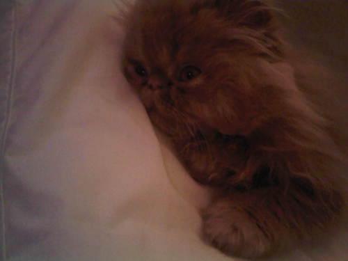 moe-kitten-06.jpg